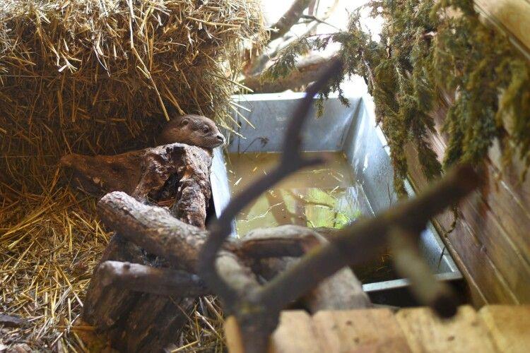 Родина Луцького зоопарку поповнилась червонокнижною мешканкою, якій потрібен вольєр
