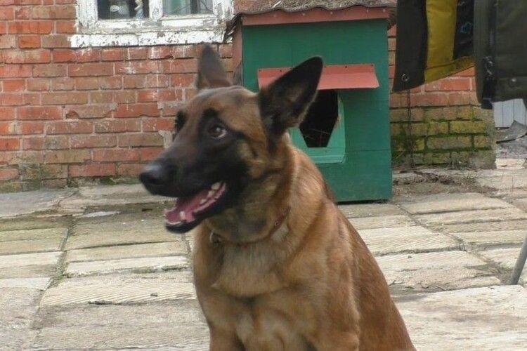 Собака  врятував життя господині, яка впала у погріб