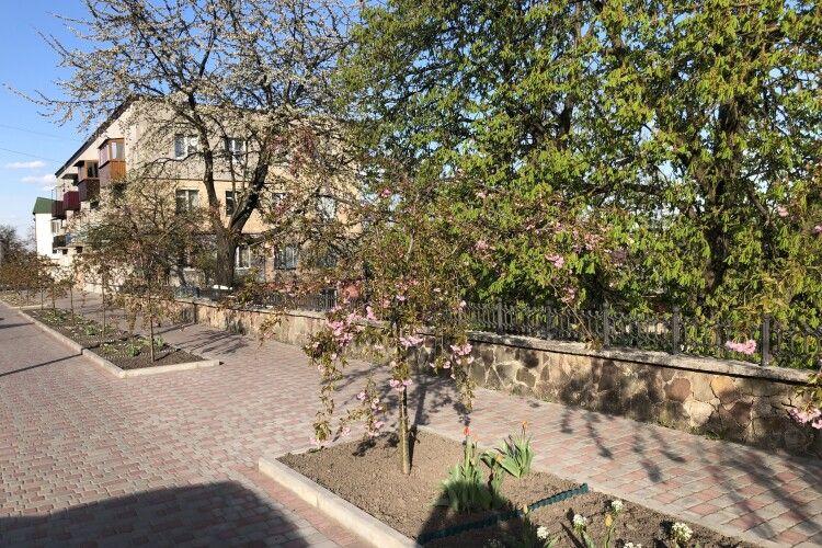 У Горохові розцвітають сакури (Фото)