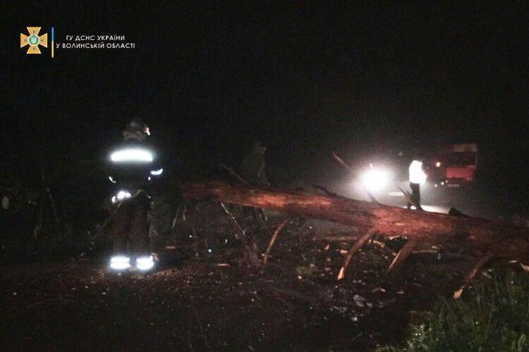 Вночі на Горохівщині негода повалила дерево на дорогу (Фото)