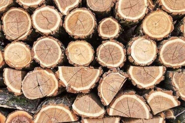 У волинян вилучили близько сотні кубів деревини: тривають обшуки