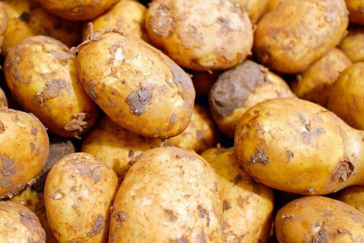 Вперше на Волині запровадили карантин через рак картоплі