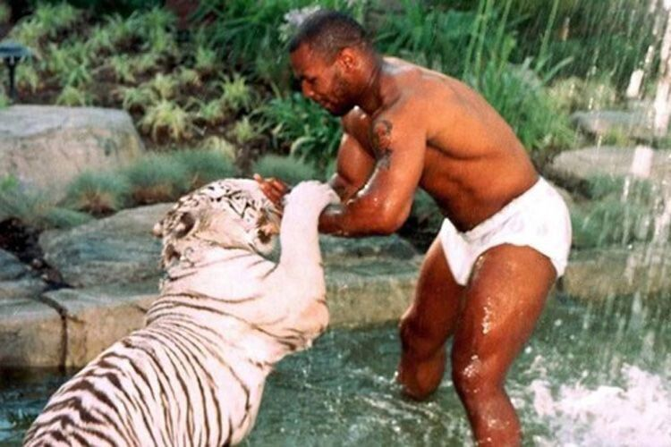 Домашній тигр Тайсона відкусив руку дівчині