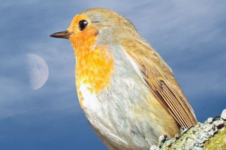 На Рівненщині вдалося зазнімкувати «місячну» вільшанку