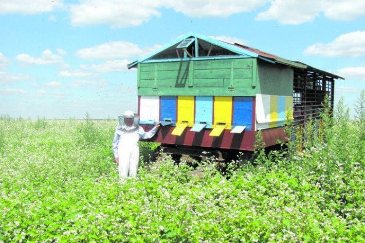 В Україні цьогоріч вперше запроваджують держпідтримку бджільництва