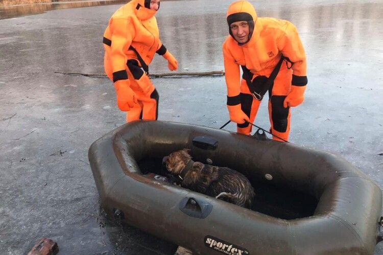 Бійці ДСНС врятували пса, який провалився під кригу на Ворсклі (Фото)