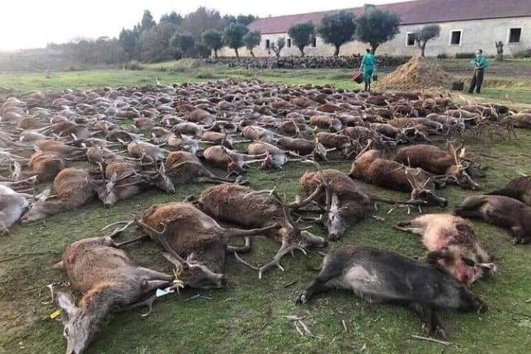 У Португалії мисливці влаштували масове побоїще лісових тварин