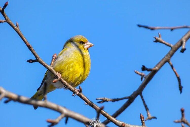 Рівненський фотограф зазнімкував рідкісного птаха (Фото)