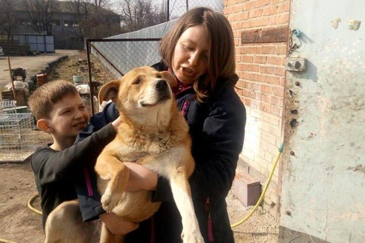 Під час карантину лучани взялися масово «всиновлювати» безпритульних псів (фото)