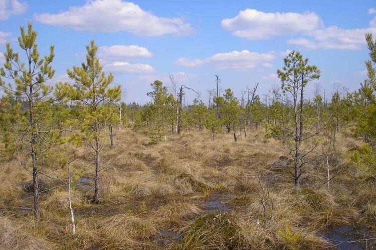 Черемському природному заповіднику на Волині – 19 років (Фото)