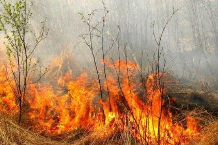 У Камені-Каширському говорили про те, яке лихо від спалювання сухої рослинності
