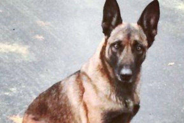 Чоловік укусив поліцейську собаку під час арешту