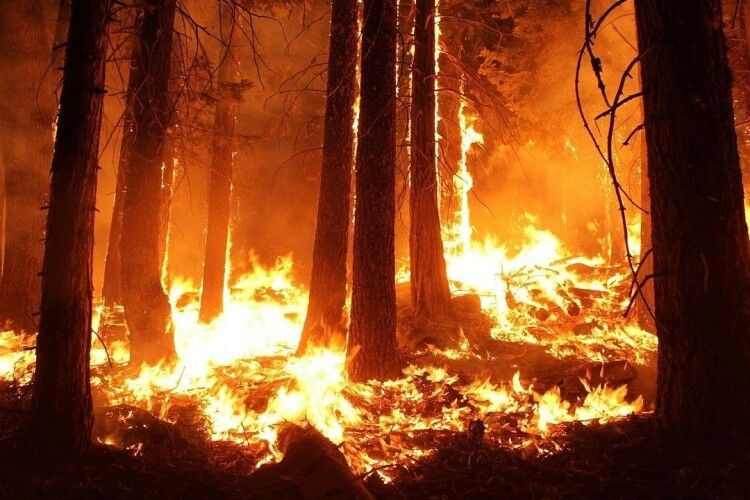 Волинянин ненароком спалив 1,2 гектара лісу