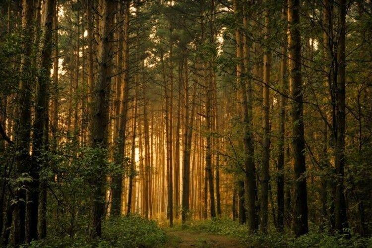 Пам'ятки природи передані під охорону лісівників