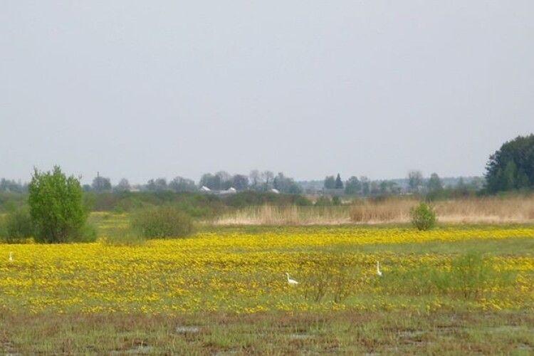 На Полісся зникають лотатеві долини