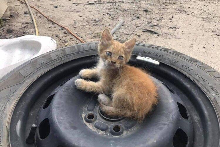 У Луцьку шукають дім кошенята, які народилися на складі автозапчастин (Фото)