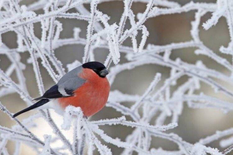 Погода на вівторок, 9 лютого: мороз трішки відпустить – і знову піде в атаку