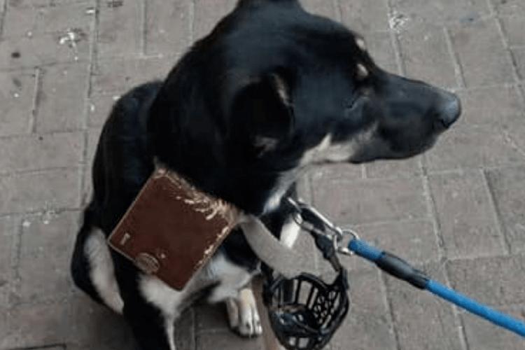 «Пробачте мені...»: господар залишив собаку біля супермаркету з гаманцем та запискою (Фото)