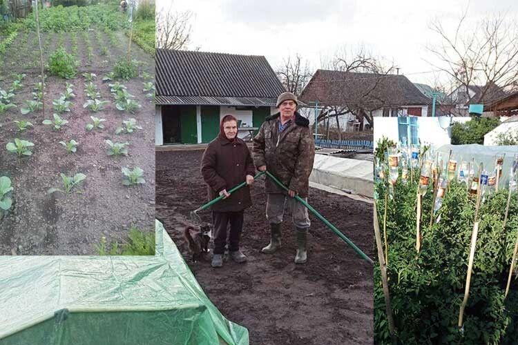 Волинським городникам поливати 300кущів помідорів допомагає… медична система