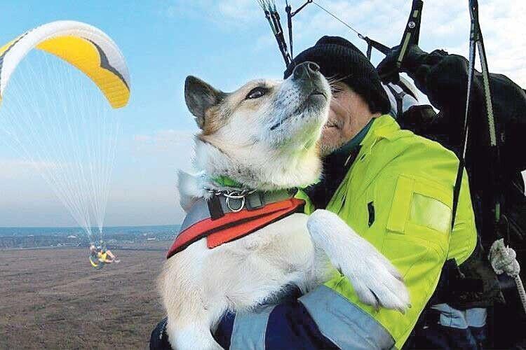 Собака зпритулку стала рекордсменом України