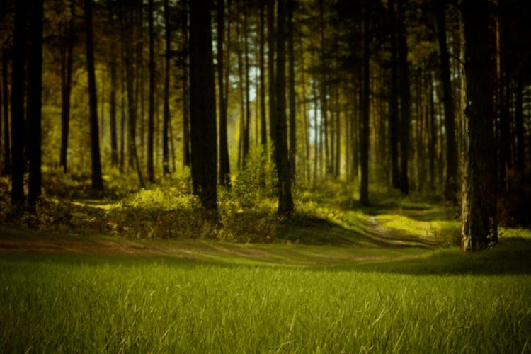 На Волині майстер лісу завдав державі шкоди на понад 400 тисяч гривень