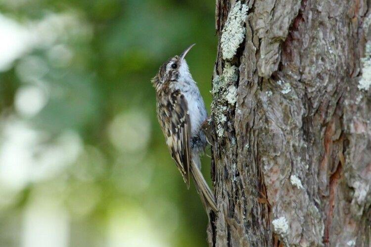 Волинянам показали птаха, який живе у старезних деревах Цуманської пущі (фото)