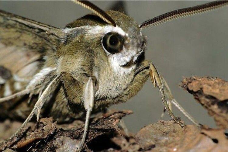 На вулицях Луцька знайшли велетенську диво-комаху (Фото)