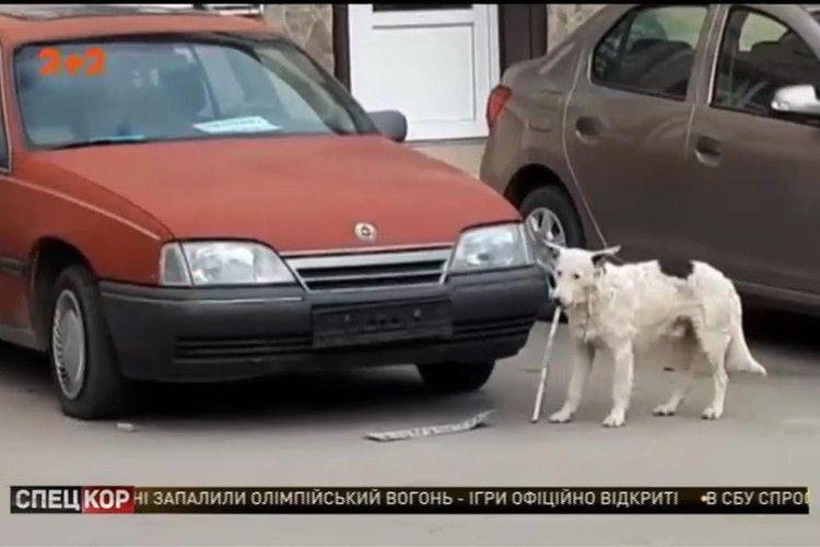 «Слава Україні!»: у Ялті «засікли» чотирилапого «диверсанта»