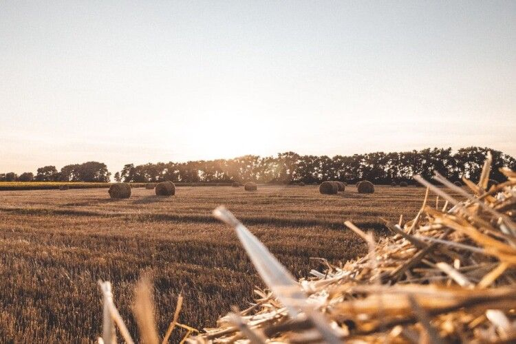 Вже майже 16 тисяч українців продали свої земельні паї