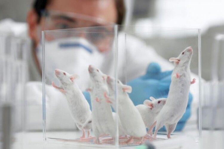 Американська компанія оприлюднила результати випробувань вакцини від COVID-19 на мишах
