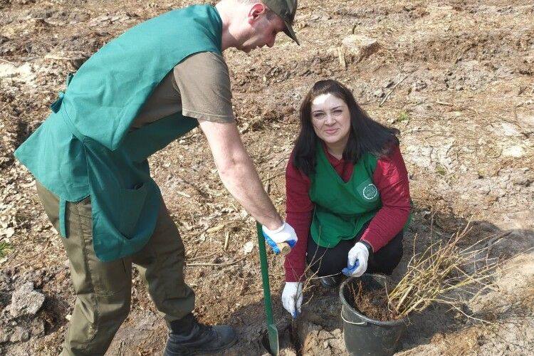 В одному з лісництв заявили, що протягом весни висадять 668 тисяч молодих деревець (Фото)