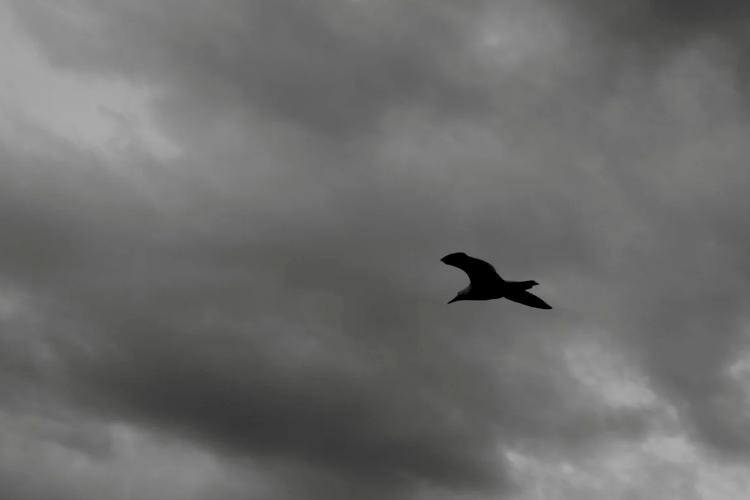 Я твій птах, підстрелений на зльоті (Поезія)