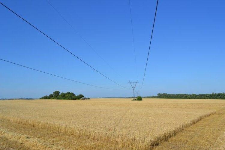 Україна за 5 днів вибрала квоти на експорт пшениці та кукурудзи в ЄС