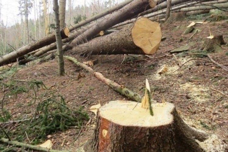 Маневиччанин нарубав дерев на 20 тисяч гривень