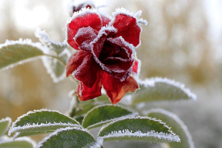 На вихідних в Україні вдарять морози