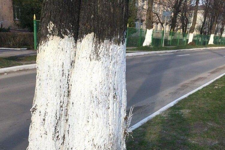 Лучан закликали не білити дерева та бордюри
