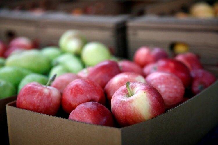 Українцям обіцяють сезон дешевих яблук