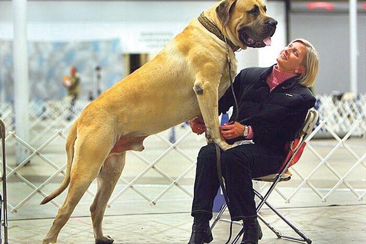 З таким псом і лев не страшний