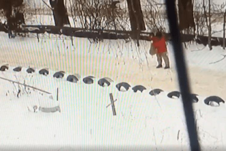 Камери спостереження зафіксували жінку, яка труїла собак