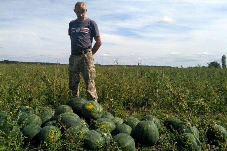 На Волині фермер посадив по сто саджанців різних сортів кавуна, щоб обрати найсмачніший (Відео)