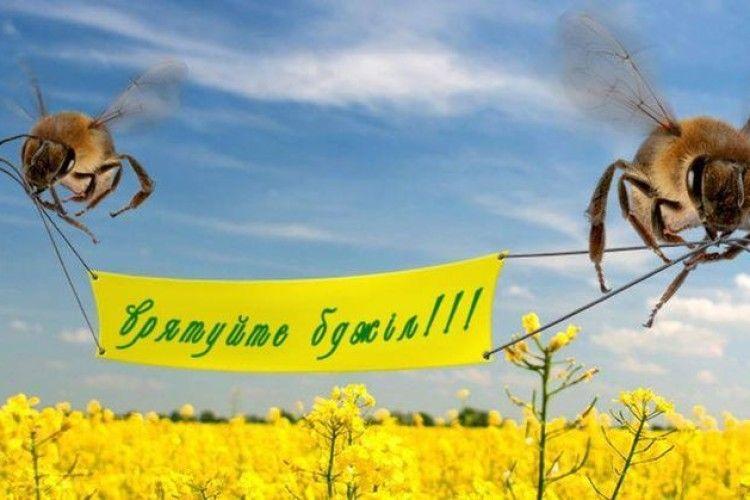 Чи підпишуть у Луцьку меморандум про захист бджіл? - «Волинь ...