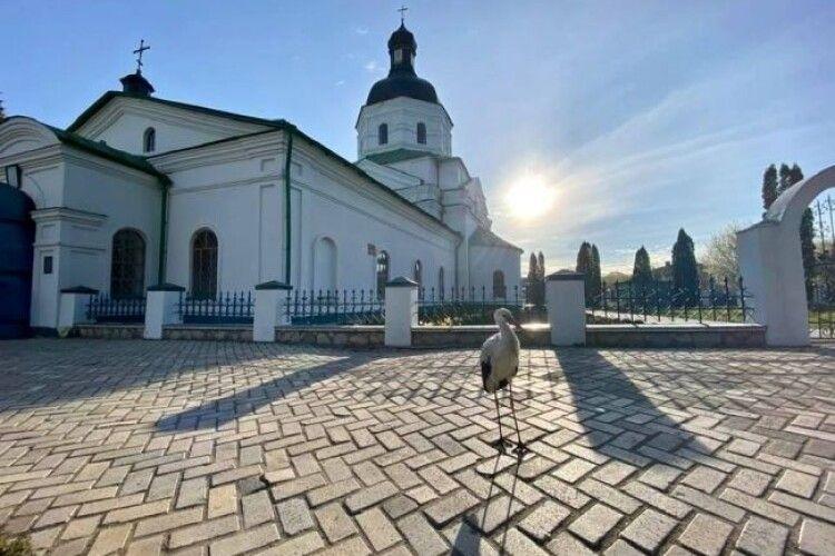 Білий птах із чорною ознакою на ім'я Сеня навідався до церкви