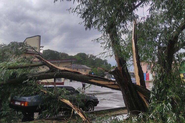 Поламані дерева, дорога у воді: у Горохові вирувала негода (Фото, відео)