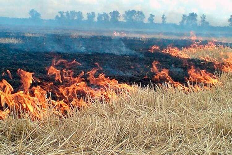 За знищення трави встановили штраф у 150 000 гривень!