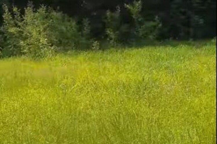 «Церква за ніч пішла під землю»: на Волині в цьому урочищі не росте жодне дерево
