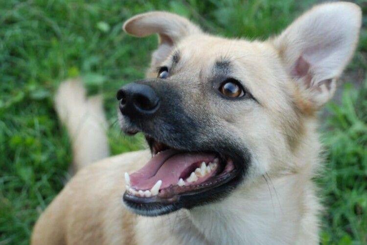 У волинській громаді село заполонили пси