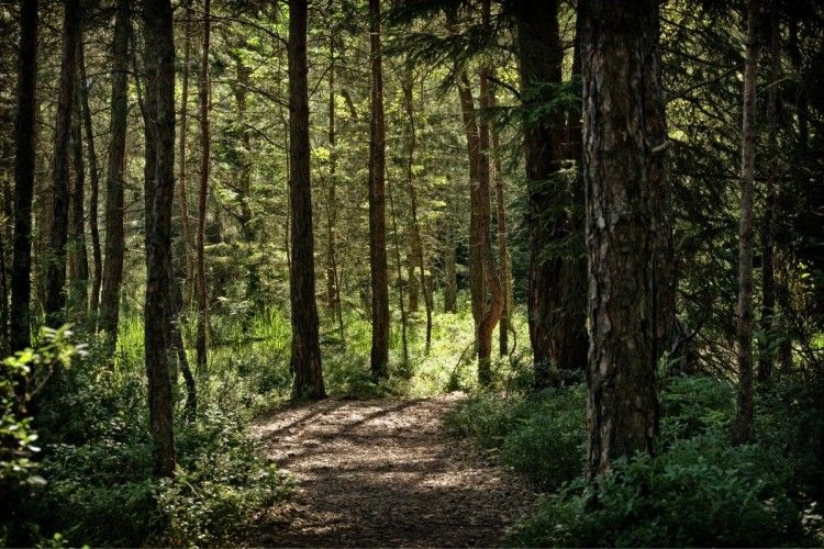 Керівник військового лісгоспу на Волині привласнив 1,2 мільйона гривень державних коштів