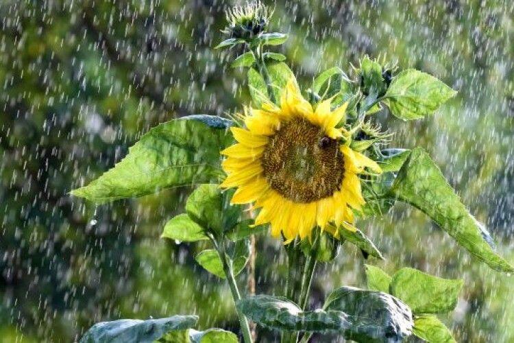 Синоптики прогнозують на Волині дощі та температурні «гойдалки»