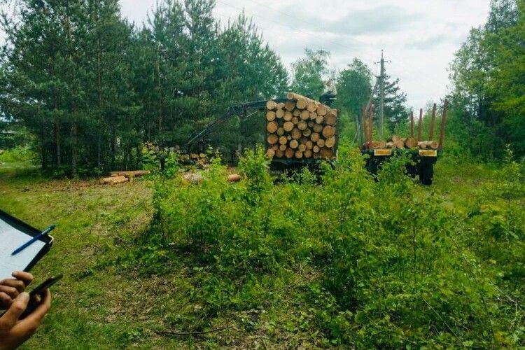 На Камінь-Каширщині лісівники та поліція  влаштували засідку біля нелегальної деревини (Фото)