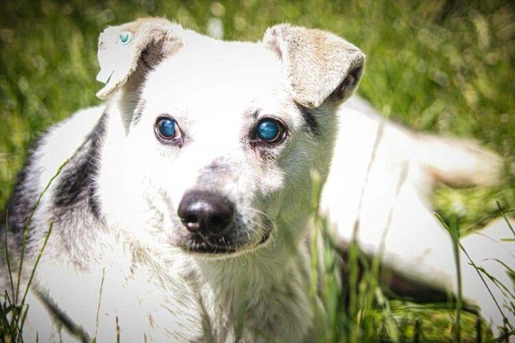 У Луцьку шукає господаря незрячий пес Бобік (Фото)